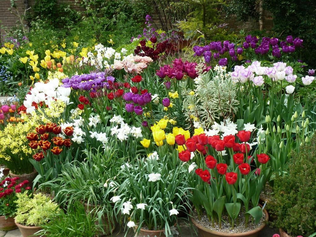 Какие цветы посадить в маи