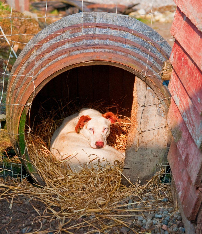 будка для собаки своими руками старая бочка