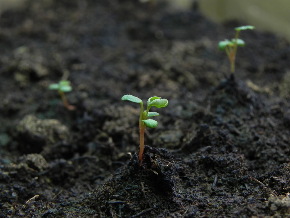 как бороться с закисанием почвы
