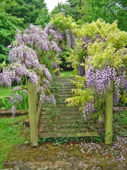 сады Бартон Хаус Англия Barton House красивый сад цветники