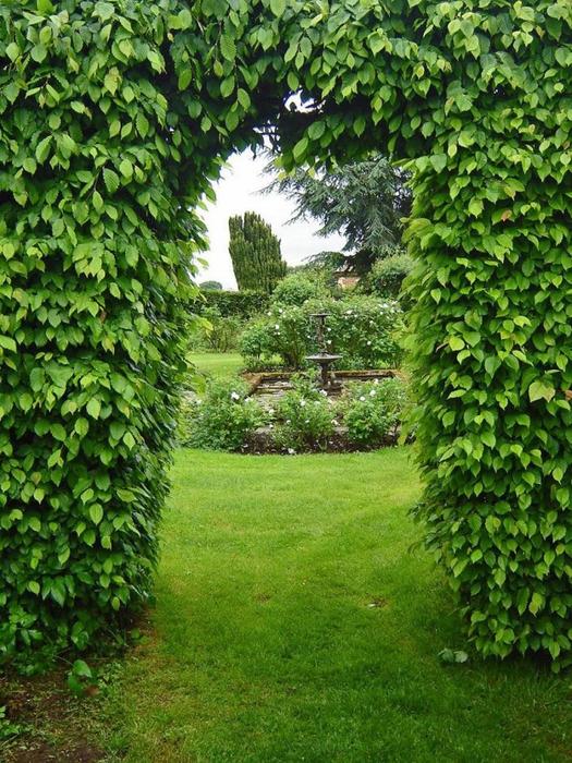 сады Бартон Хаус Англия Barton House красивый сад арка