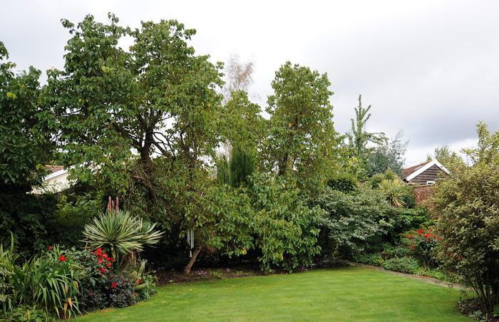 Магнолия Хаус красивый сад Англия газон