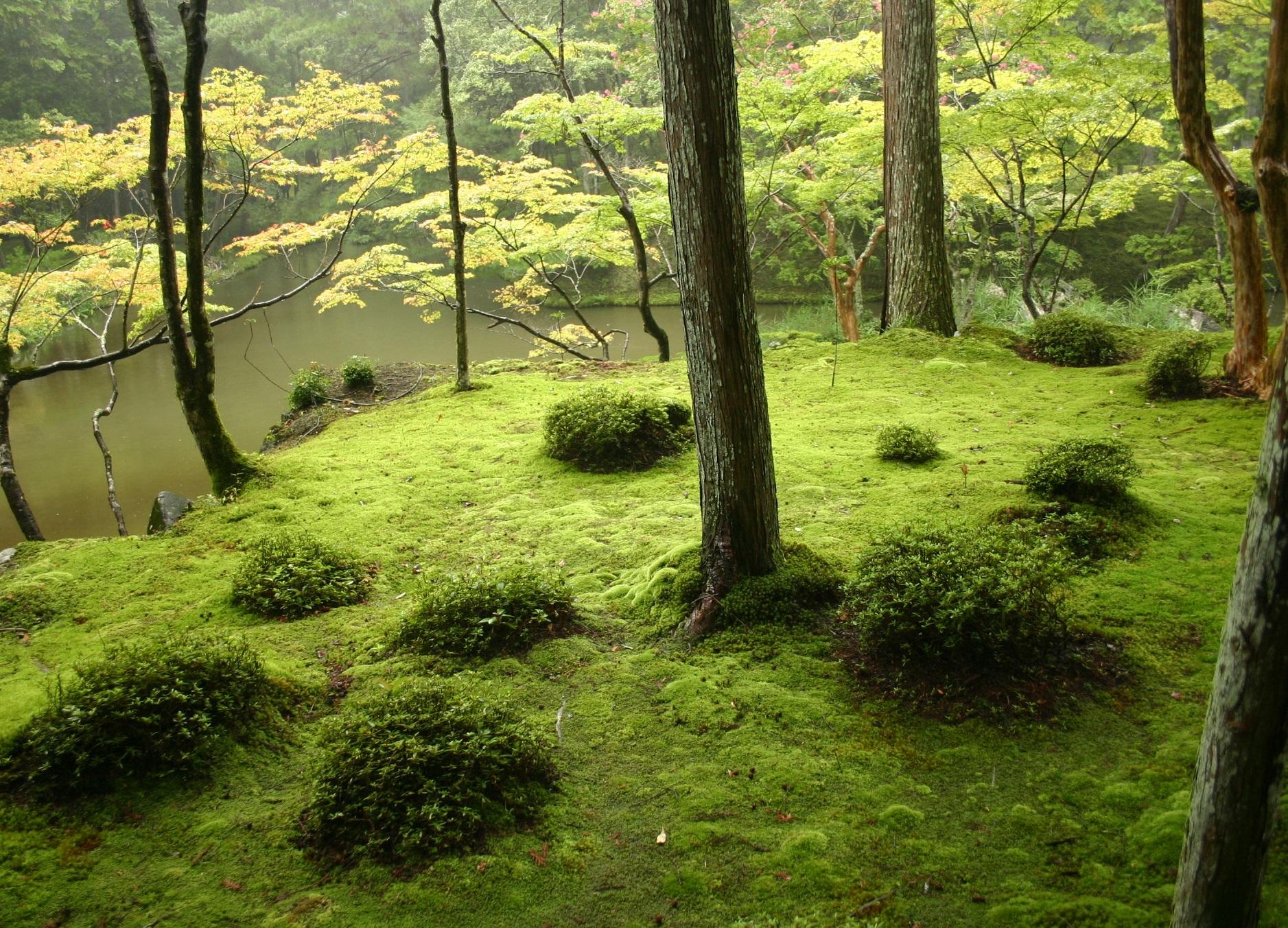 мох в саду как выращивать