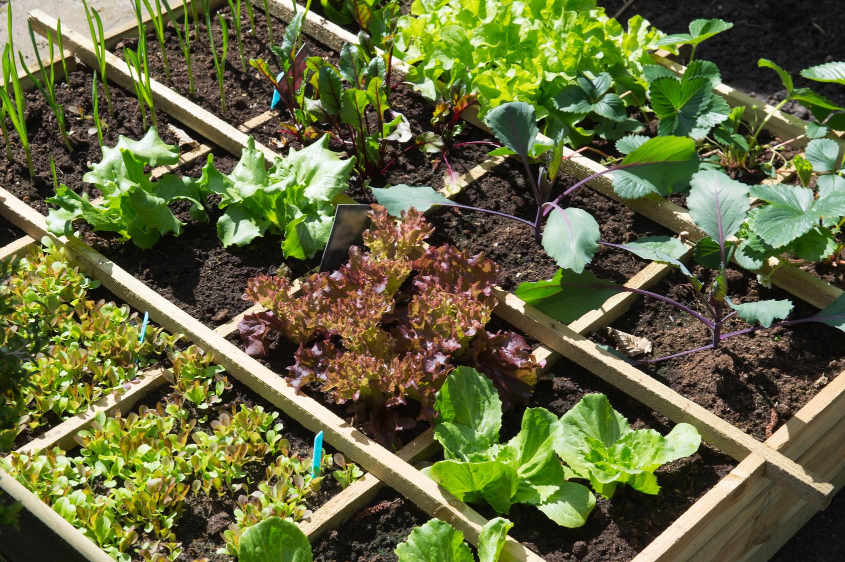 овощной сад на небольшой площади из деревянного ящика