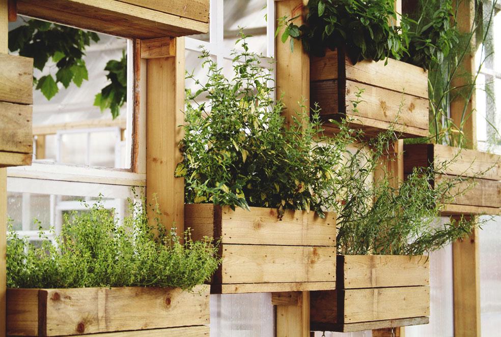 контейнерный вертикальный сад своими руками из ящиков