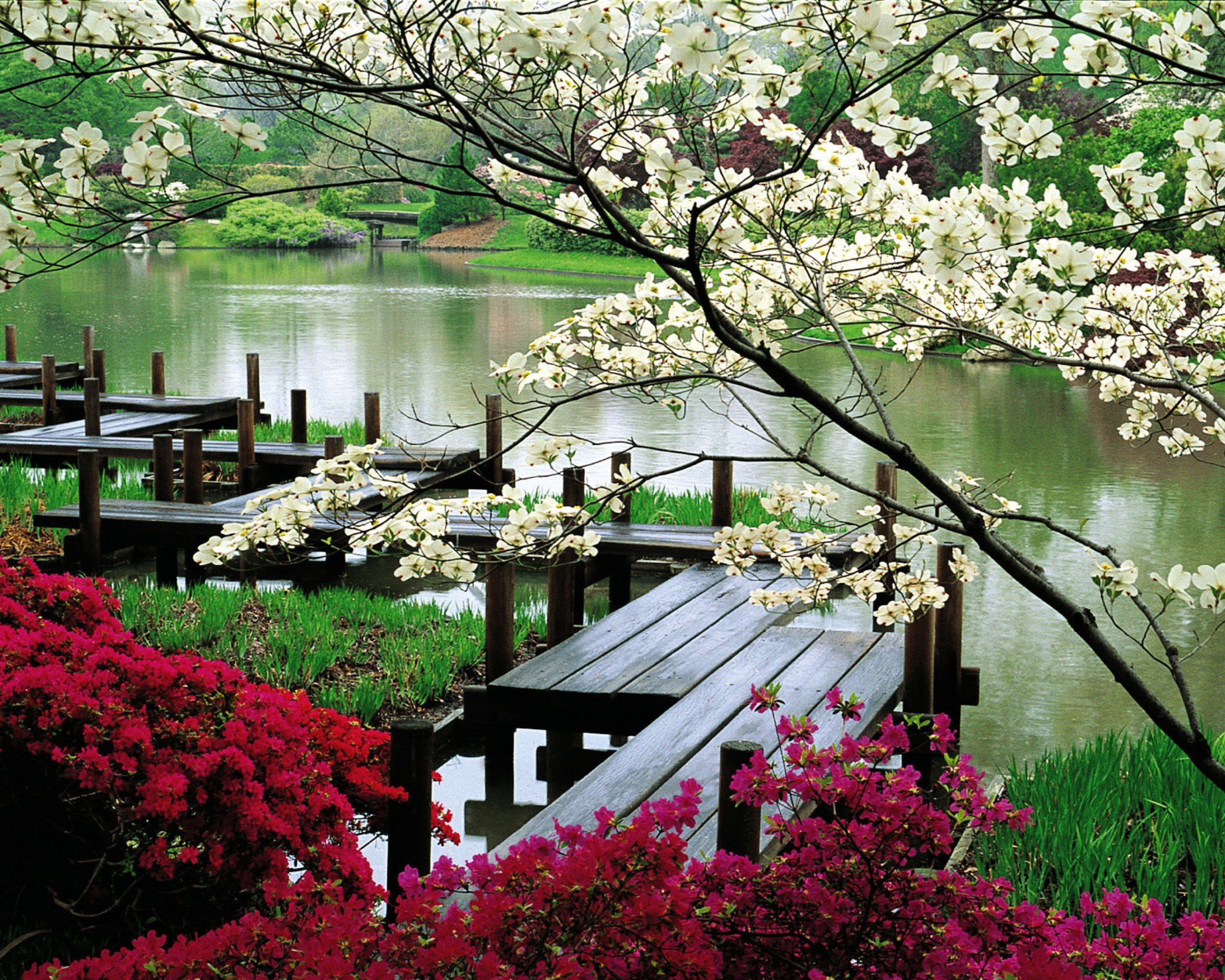 японский сад сад в японском стиле символизм мост яцухаси
