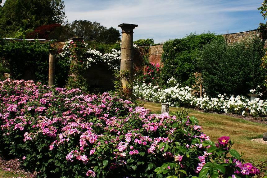 Замок Хивер сад роз красивый сад Англия вертикальное озеленение плетистые розы арка