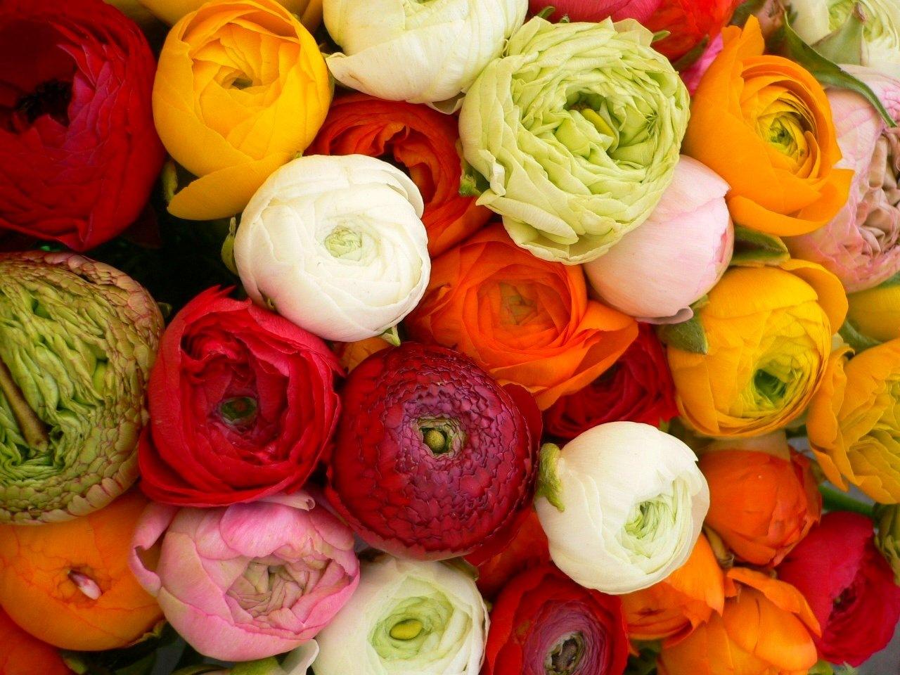 ранункулюс шикарный красивый цветок для свадебного букета