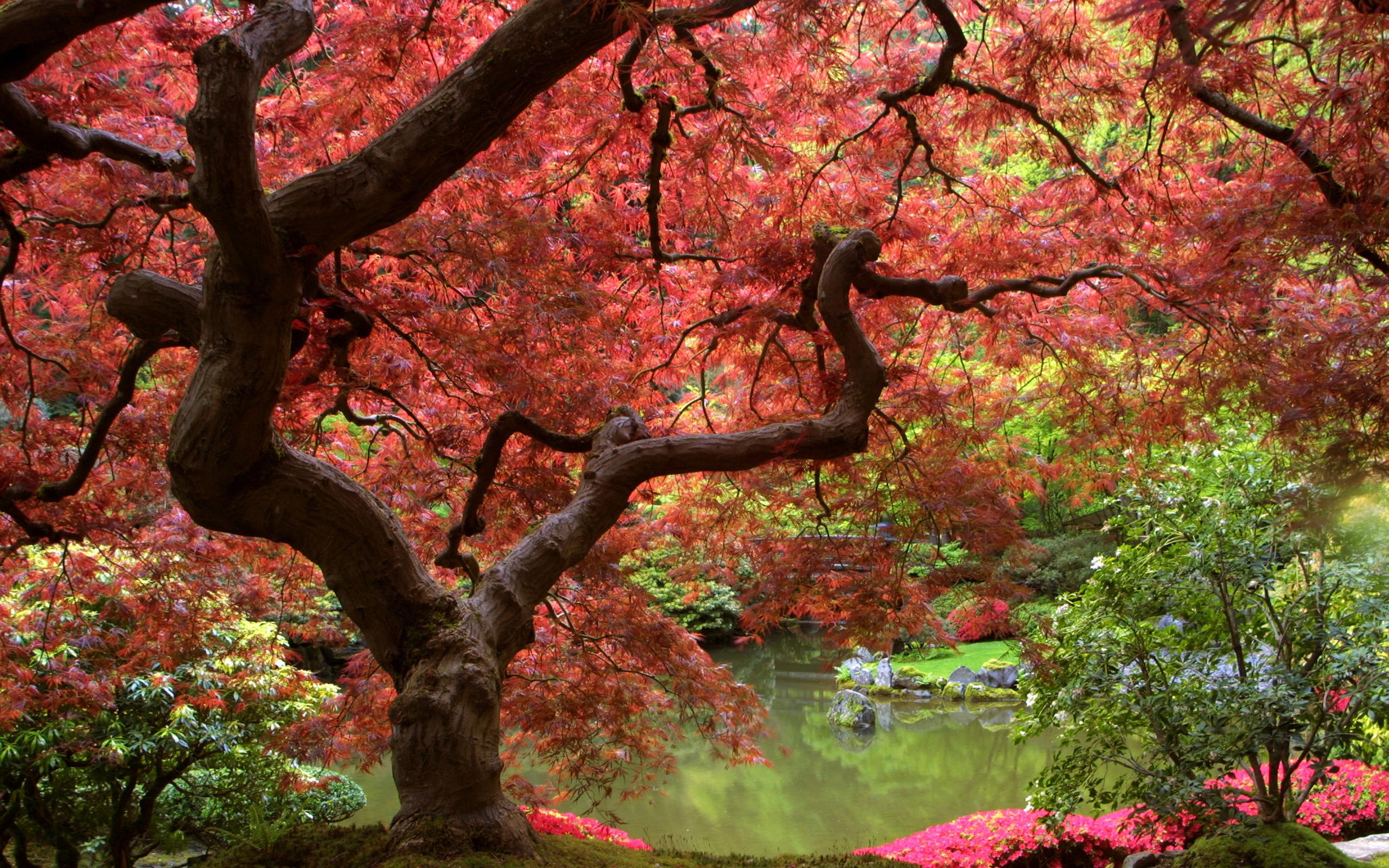японский сад символизм японских садов клен