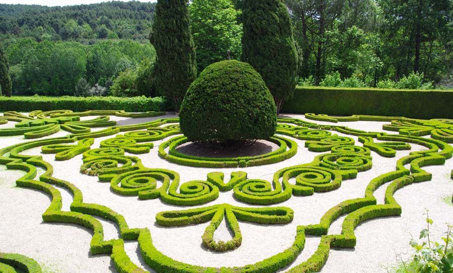 декоративные кустарники для сада овальная крона