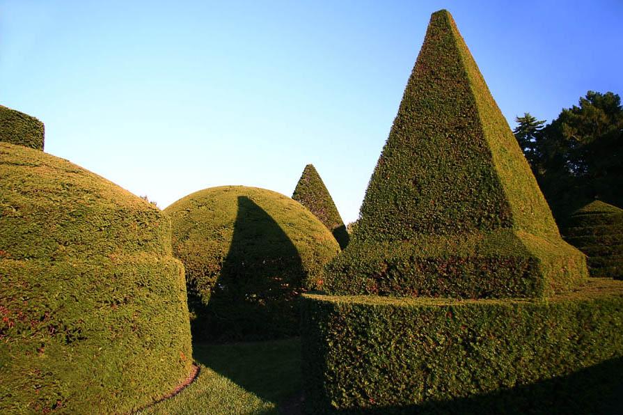 декоративные кустарники для сада пирамидальная крона