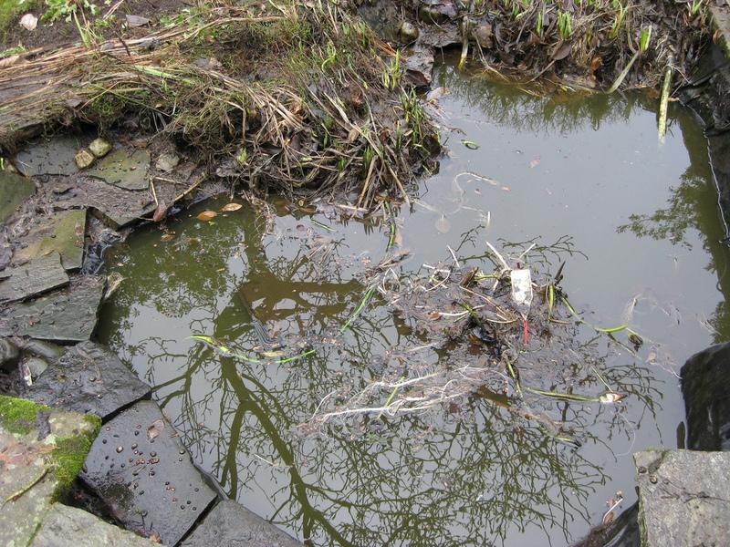 как правильно чистить водоем