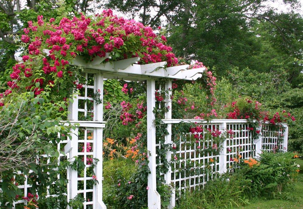 вертикальное озеленение забор пергола арка