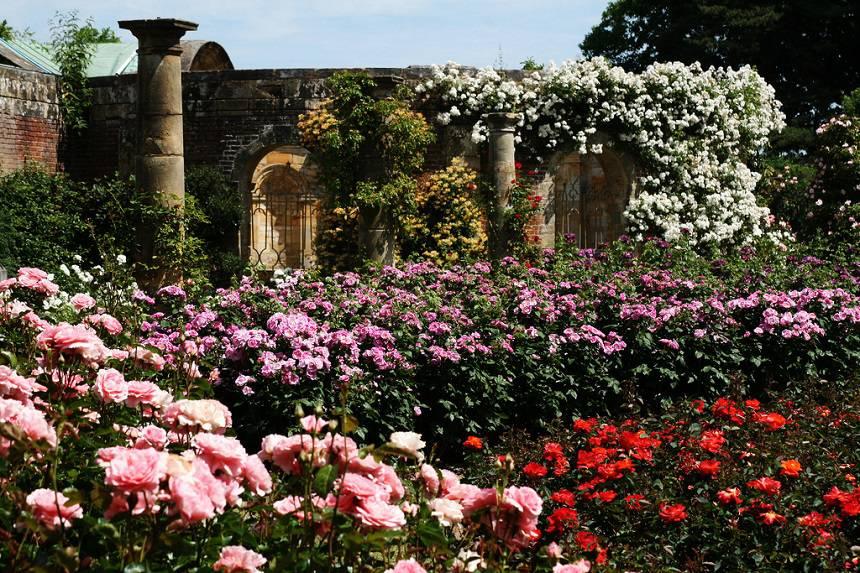 Замок Хивер сад роз красивый сад Англия вертикальное озеленение