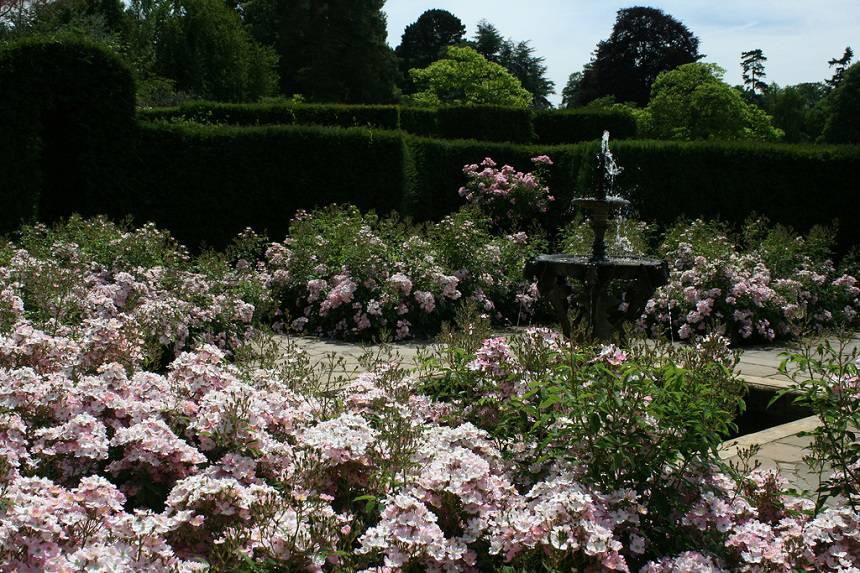 Замок Хивер сад роз красивый сад Англия  клумба фонтан