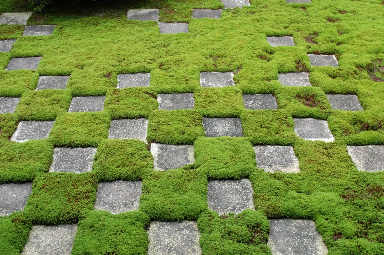 мох садовая дорожка