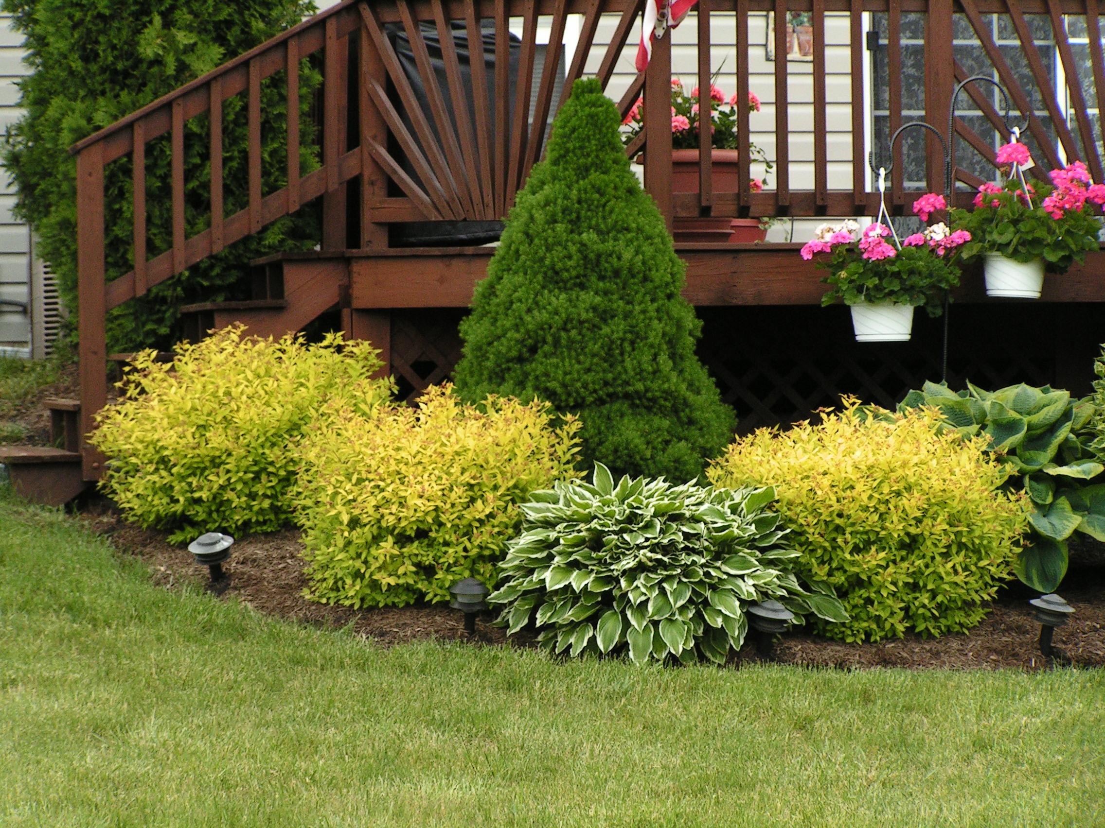 группы из декоративных кустарников для украшения сада