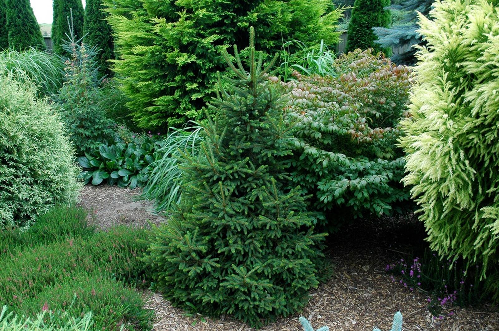 композиции из деревьев и кустарников своими руками на участке