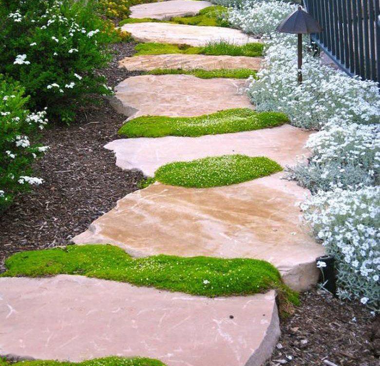 растения для кислых почв мох садовая дорожка