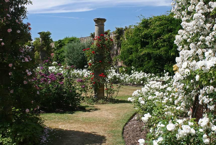 Замок Хивер сад роз красивый сад Англия вертикальное озеленение плетистые розы колонна