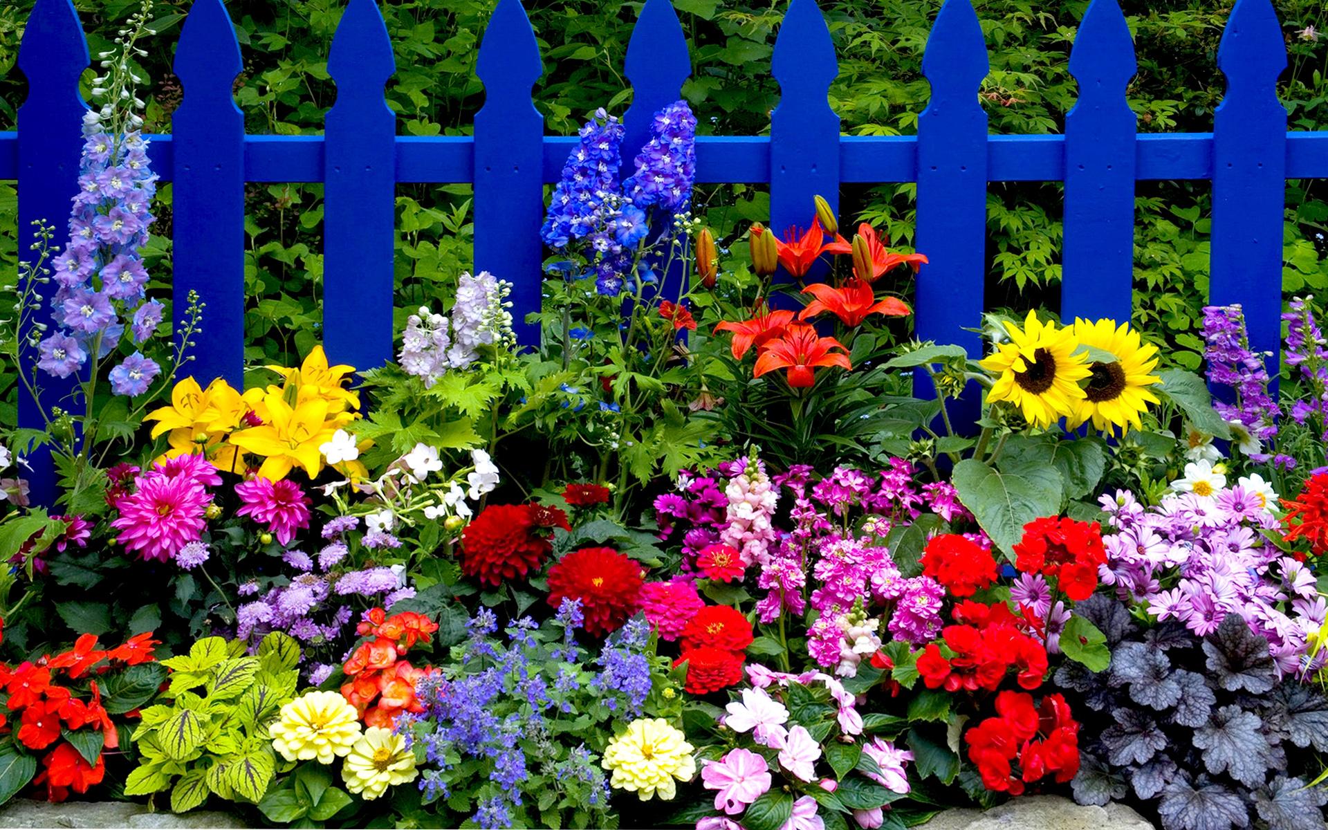 украшение забора цветочный микс