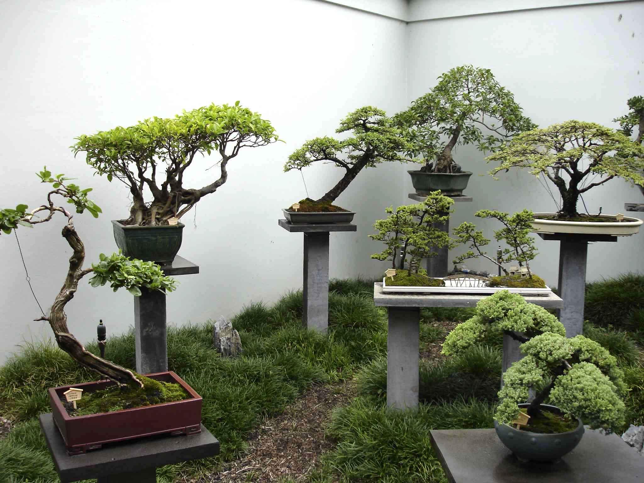 японский сад символизм японских садов деревья и кустарники