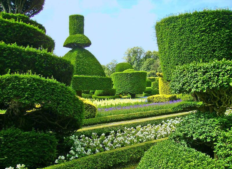 сады левенс холл французский регулярный стиль в ландшафтном дизайне топиари