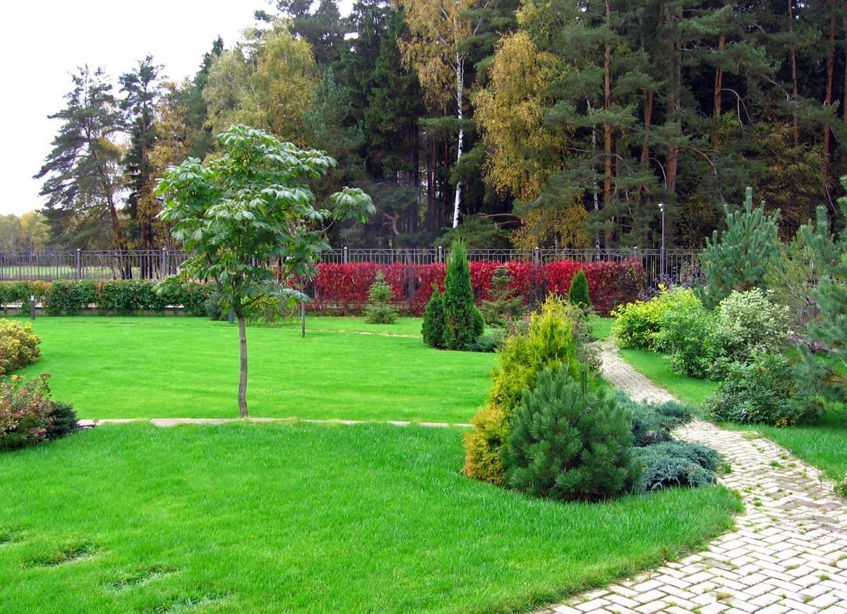 украшение газона хвойниками