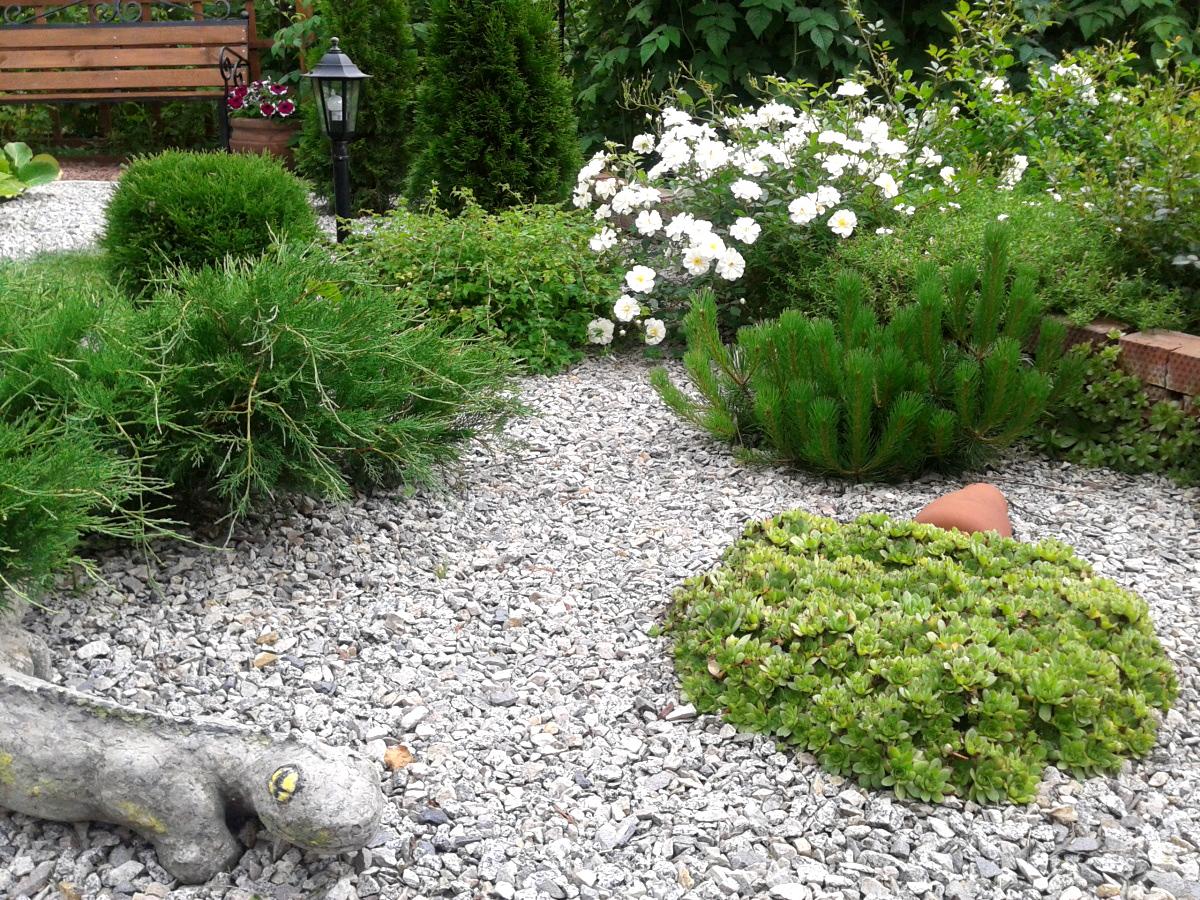 гравийный сад своими руками