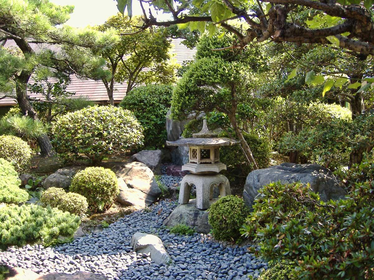 хвойники для сада в японском стиле