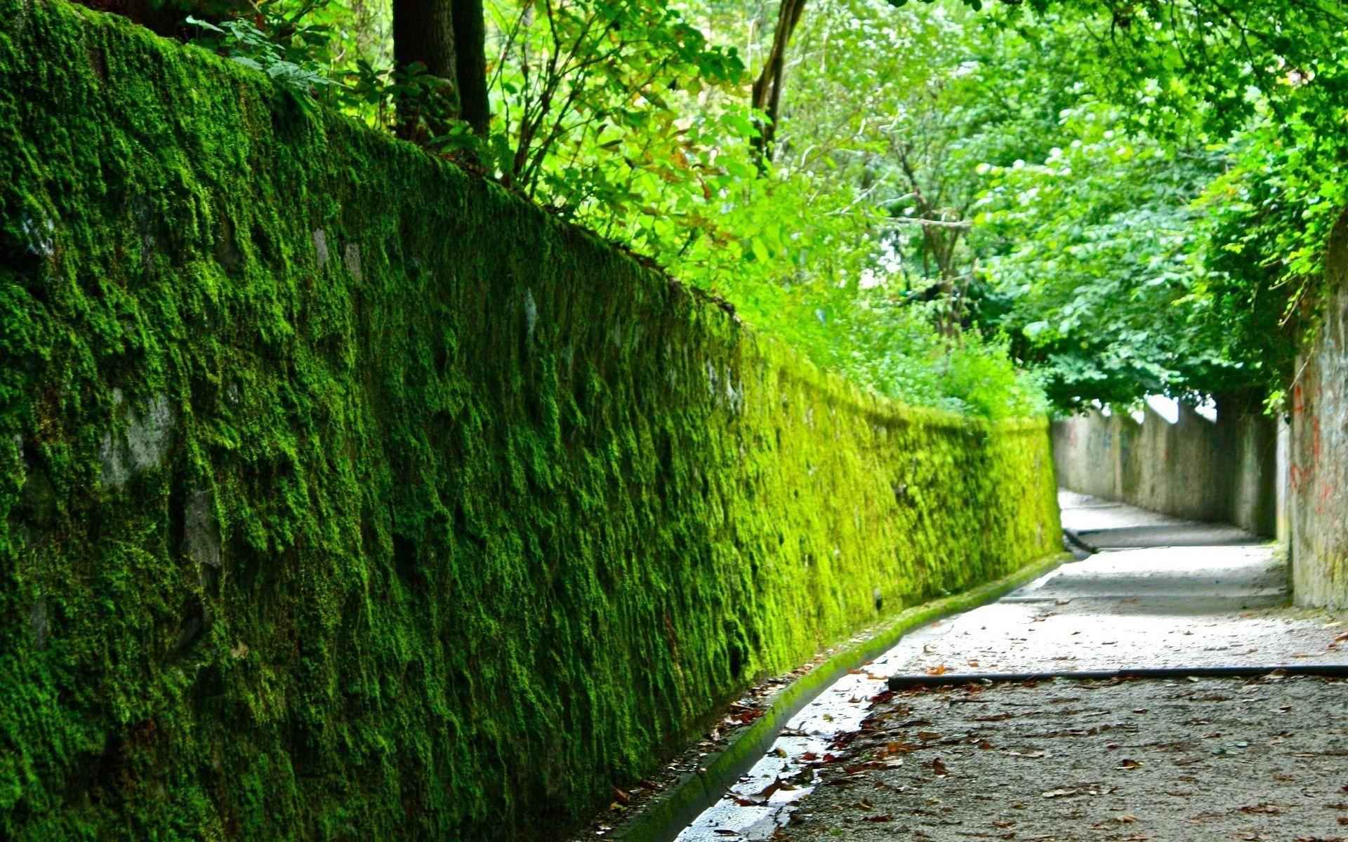 как украсить забор мох