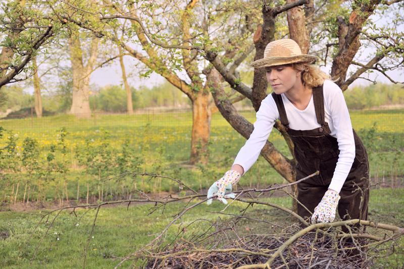 огород зимой, хитсад, сад зимой, уход за садом, ствол дерева