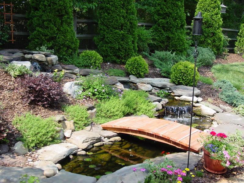 проект сада украшение водоема растениями