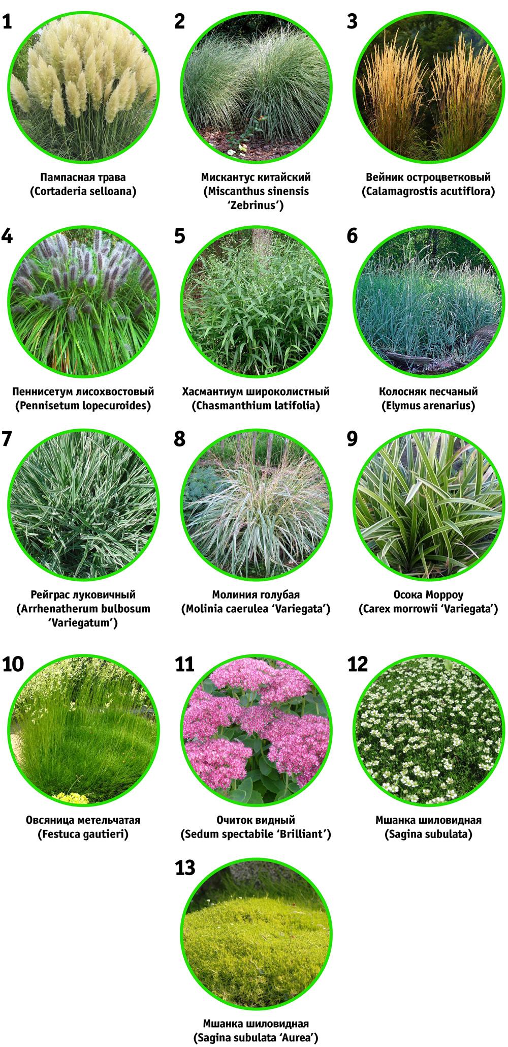 схема миксбордера травы и злаки