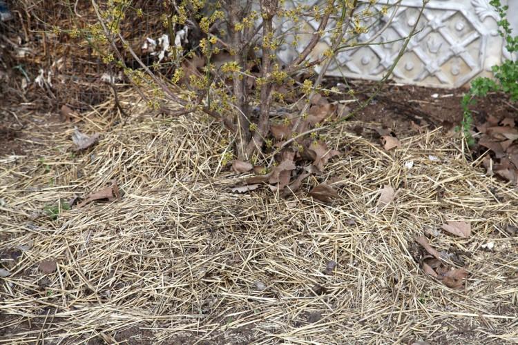 Подручные материалы для укрытия растений