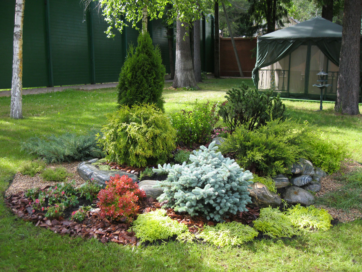 ландшафтный дизайн хвойный сад