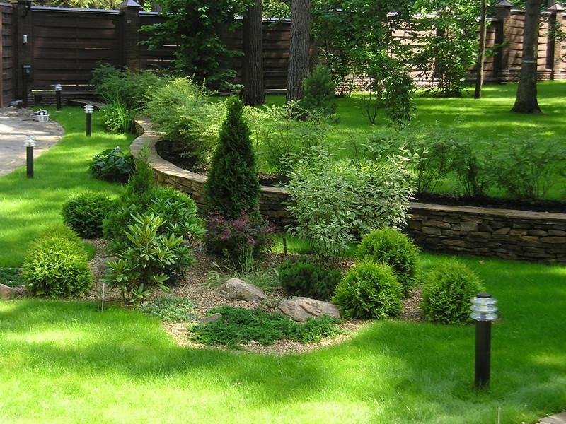 Хвойные деревья в саду