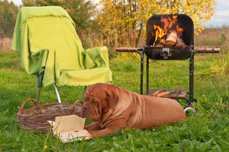 Собака читает как подготовить сад к новому сезону