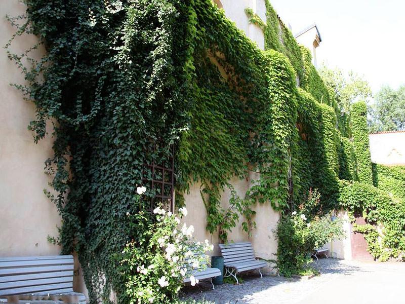 сад в архитектурном стиле вертикальное озеленение