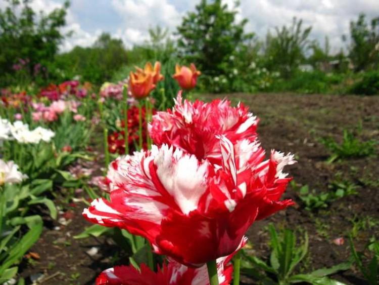 поздняя высадка цветов