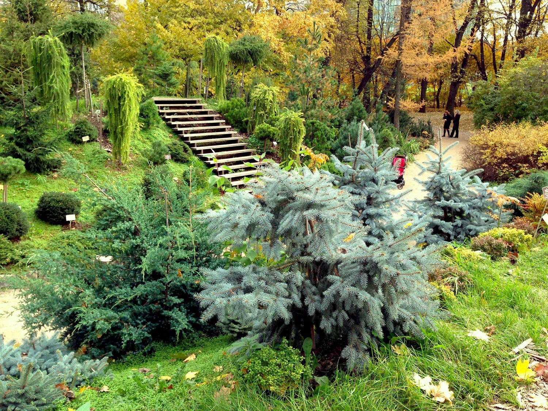 Сад из хвойников