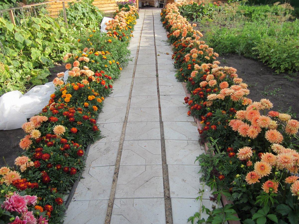 цветы в качестве бордюра