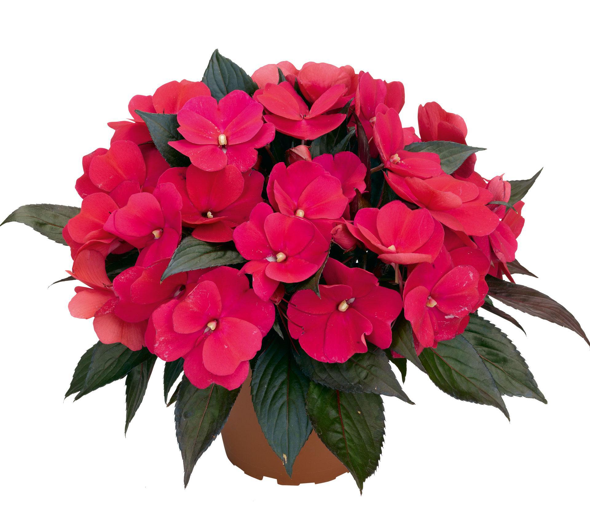 цветы в кашпо в фото
