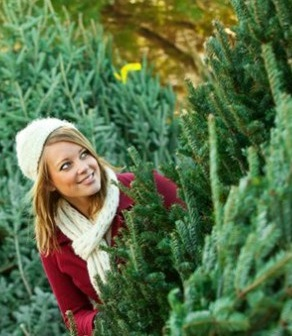 фото выбора елки