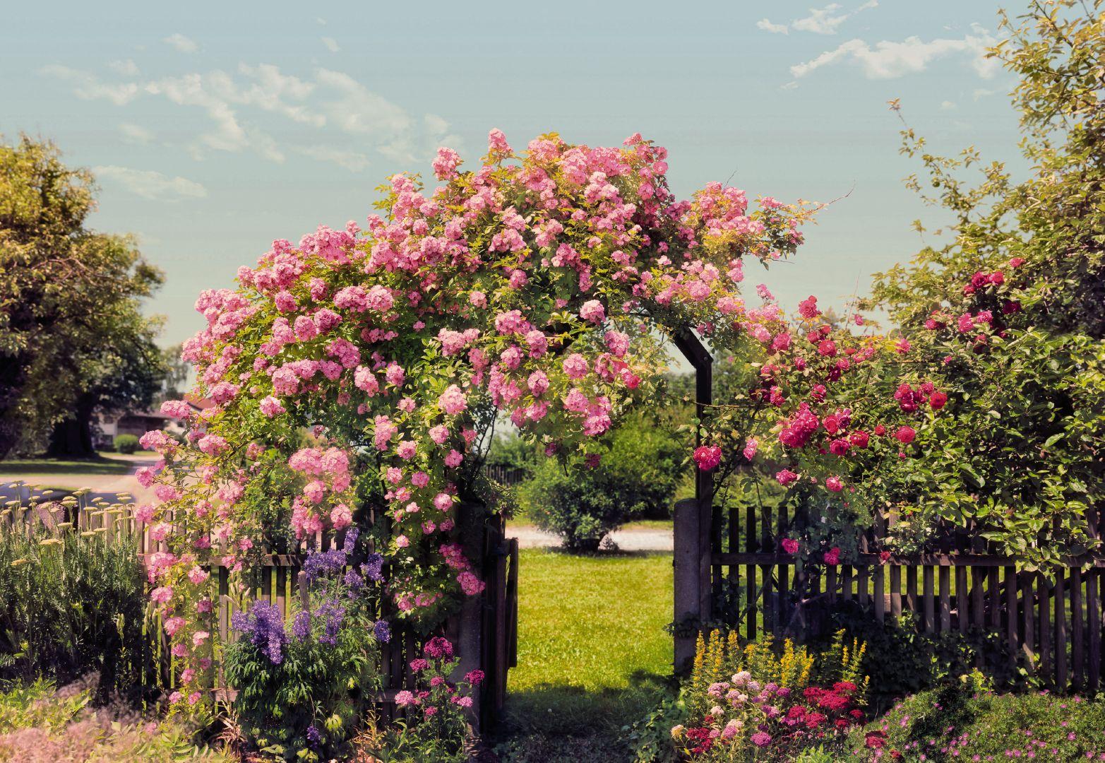 Посадка роз - занятие не сложное, но трудоемкое